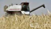 Потребители в Крыму не ощутят снижение урожая зерновых