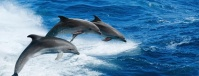 В Ялте проведут митинг «Дельфинам - море!»