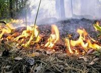 На юге Крыма объявлена чрезвычайная пожароопасность