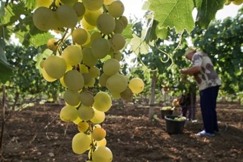 Аграрии Крыма могут получить гранты до 3 млн руб