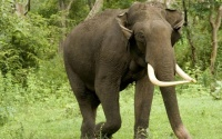 Купание слонов стало популярным еженедельным шоу для туристов в Евпатории