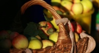 Крымские садоводы ожидают рекордный за 10 лет урожай яблок