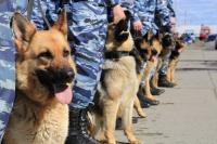 Керченская полиция ищет кинологов