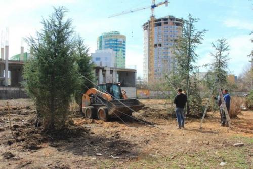 Более 90% высаженных в Симферополе в этом году деревьев успешно прижились