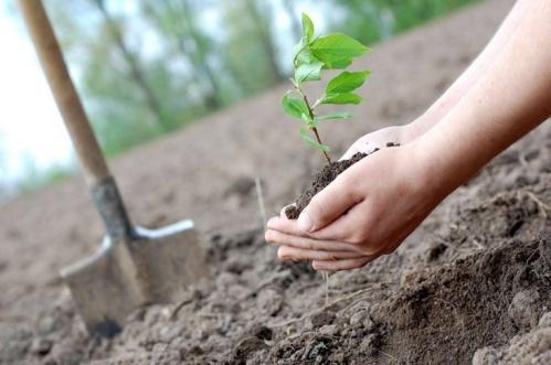 В октябре в Севастополе пройдет высадка новых деревьев