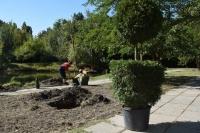 В симферопольском парке Гагарина высадят почти 70 саженцев кедров, ив и можжевельников