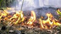 В Крыму на четыре дня ввели табу на костры и пиротехнику