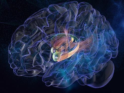 Как мозг изучает языки, и почему «детский метод» взрослым не подходит