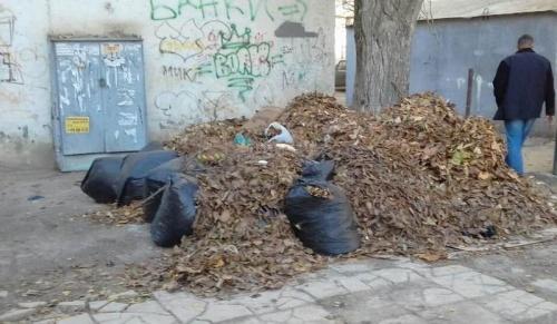 Около 160 дворников и спецтехника ежедневно привлекаются к сбору опавшей листвы в Симферополе