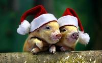 В Ялте посоревнуются в изображении символа Года свиньи