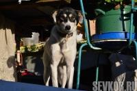 В Севастополе проводят бесплатную вакцинацию домашних животных