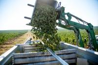Крымские аграрии завершили сбор винограда