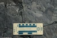 В Южной Корее нашли следы самого маленького в мире динозавра