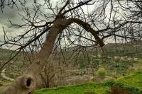 """Под новое кладбище в Ялте могут отдать земли """"Массандры"""""""