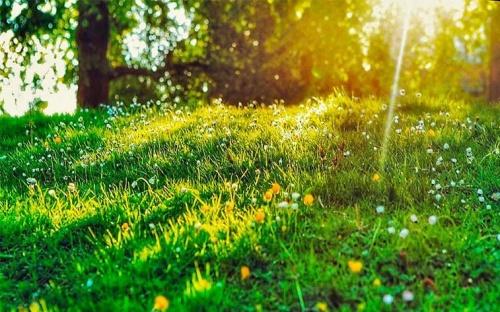 Фотосинтез появился на миллиард лет раньше, чем думали ученые