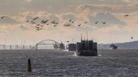 Почти 19 тыс судов прошли через Керченский пролив за последние восемь месяцев
