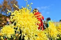 В Никитском саду выбрали королеву Бала хризантем 2018 года
