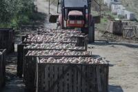 Севастопольские аграрии получили от государства компенсацию потерь от весеннего подорожания дизельного топлива