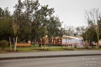 Двенадцать молодых деревьев обживаются в Евпатории