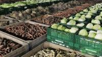 Севастополь отправил на материк почти 600 тонн овощей и фруктов