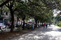 В Ялте после нового года начнется расчистка пешеходной территории улицы Рузвельта