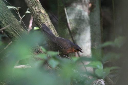 Обнаружена самая редкая птица в мире