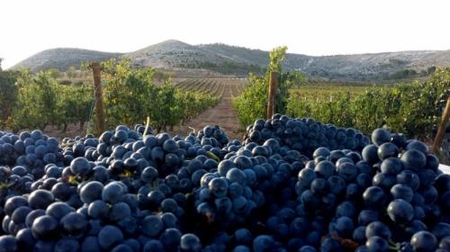 В Севастополе начнут готовить виноградарей и виноделов