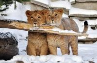 Обитателям зооуголка в Симферополе утеплили жилища и добавили витаминов в рацион