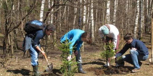 Более 200 га леса высажено в Крыму в прошлом году и установлены границы трех заказников