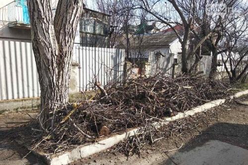 Весной в Симферополе снесут три сотни аварийно-опасных деревьев