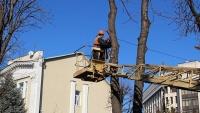 В Симферополе приступили к сносу и обрезке деревьев