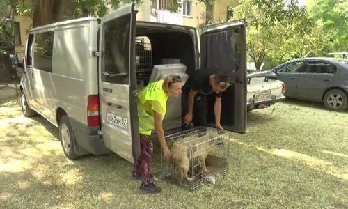 На стерилизацию бездомных животных в Керчи потратят 2,3 миллиона