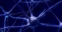 Ученые научились поворачивать вспять депрессивные процессы у мышей