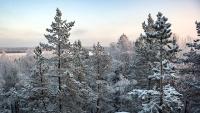 В 2019 году в Крыму восстановят 100 га лесополос