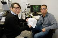 Ученые создают терморегулирующую ткань