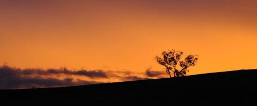 Зима в Австралии исчезнет к 2050 году