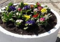 Симферополь закупит более 34 тысяч саженцев цветов для высадки на клумбах и автомобильных кольцах
