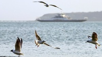 В Крыму оценили пересмотр ФРГ запрета на заход судов в порты полуострова