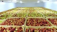 Инвестор из Турции заинтересовался строительством современного фруктохранилища под Симферополем