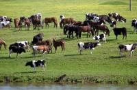 Крымские аграрии получат более 300 млн рублей на поддержку племенного животноводства