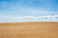 В Севастополе начнут раздавать бесплатную землю