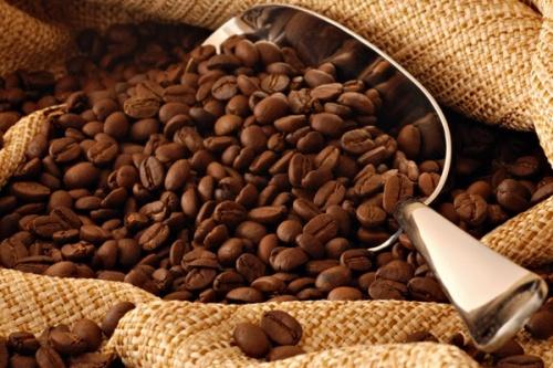 В Крыму собрались производить 4000 тонн кофе в год
