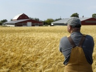 За пять лет в Севастополе при господдержке появилось 50 новых фермерских хозяйств