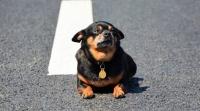 Штрафы за самовыгул домашних животных могут появиться в Евпатории