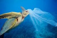 180 стран договорились с ООН о регулировании экспорта пластиковых отходов