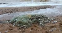 Севастопольского браконьера задержали с уловом на 270 тыс рублей