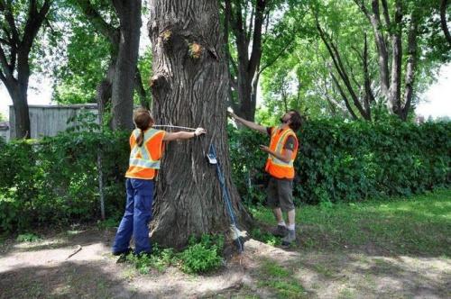 В Симферополе продолжается инвентаризация деревьев и кустарников