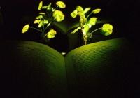 Светящиеся растения смогут заменить лампы в экологичных домах