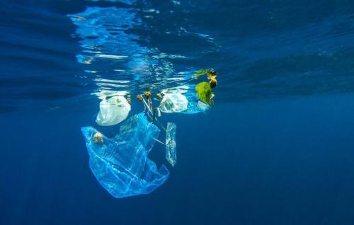 Загрязнение пластиком вредит бактериям, помогающим производить кислород, которым мы дышим