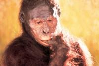 Опровергнута популярная версия о настоящем предке человека